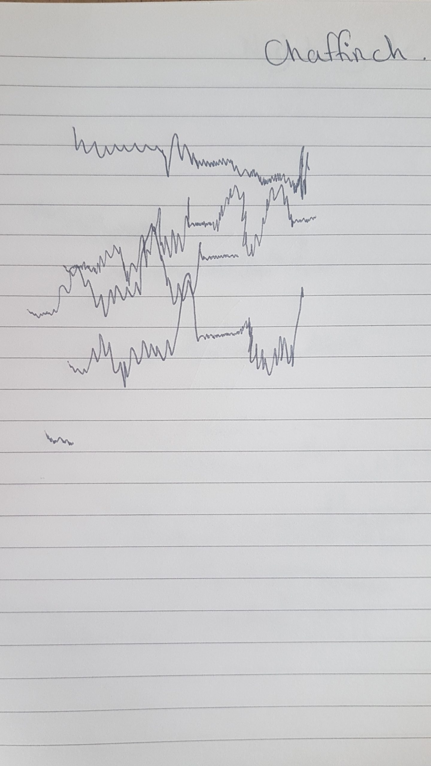 Drawing of a chaffinch's birdsong