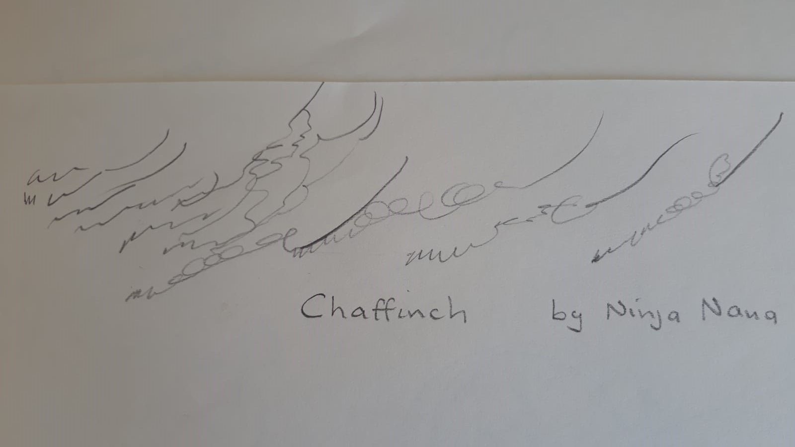 Drawing of a chaffinch's song